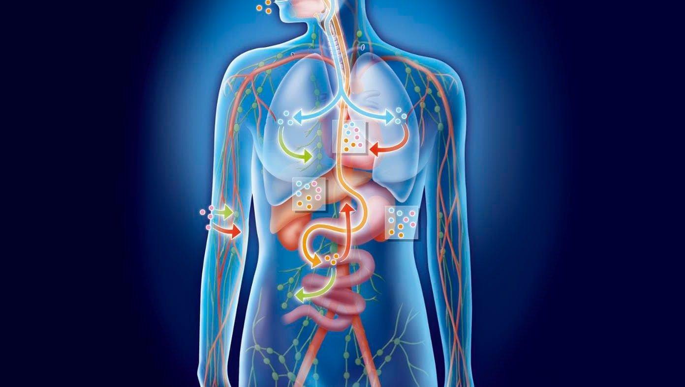 Пищеварительный процесс в организме человека