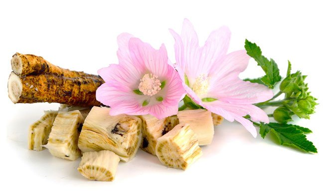 Алтей - лечебные свойства, применение, противопоказания и рецепты лечения алтеем