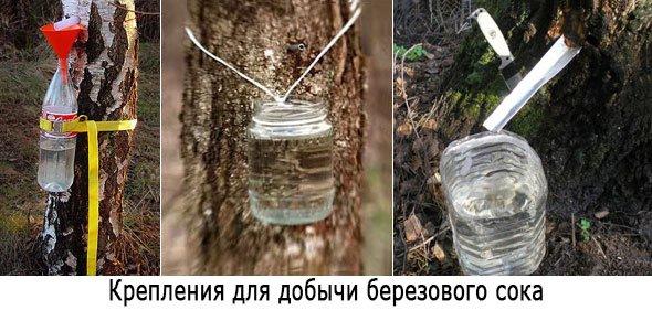Приспособления для добычи березового сока