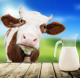 Как отличить настоящее молоко от подделки?