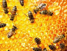 Вред и противопоказания меда