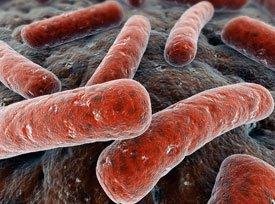 Возбудитель туберкулеза – микобактерии туберкулеза (МБТ, Mycobacterium tuberculosis), или как их еще называют - палочки Коха