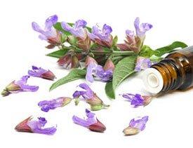 Рецепты применения шалфея в лечебных целях
