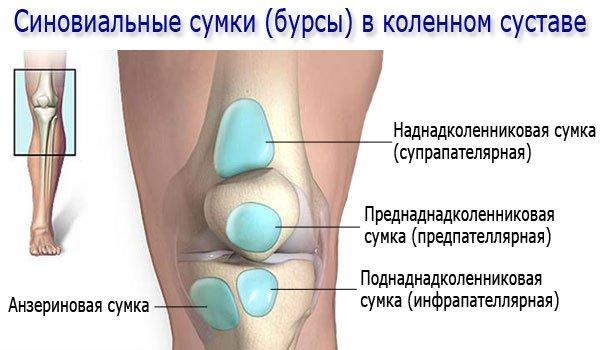Синовиальные сумки (бурсы) в коленном суставе
