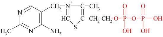 Фосфорилированная форма тиамина