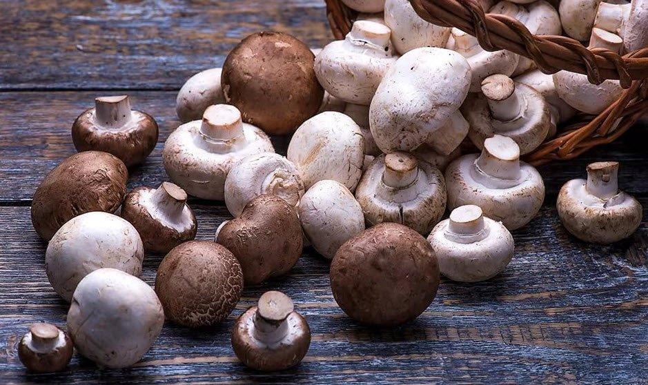 польза грибов шампиньонов