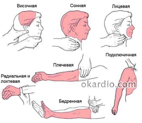 зоны кровоснабжения артерий