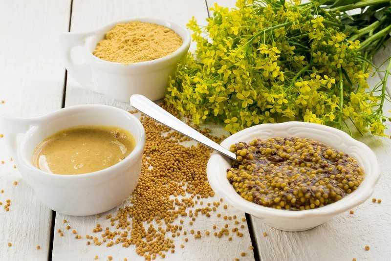 Полезные и лечебные свойства горчицы